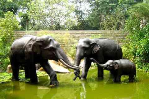 China Life Size bronze animal elephant statues landscape decor